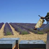 Les apiculteurs et les apicultrices