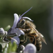 Des abeilles et des ruches en Provence et dans les Alpes du Sud