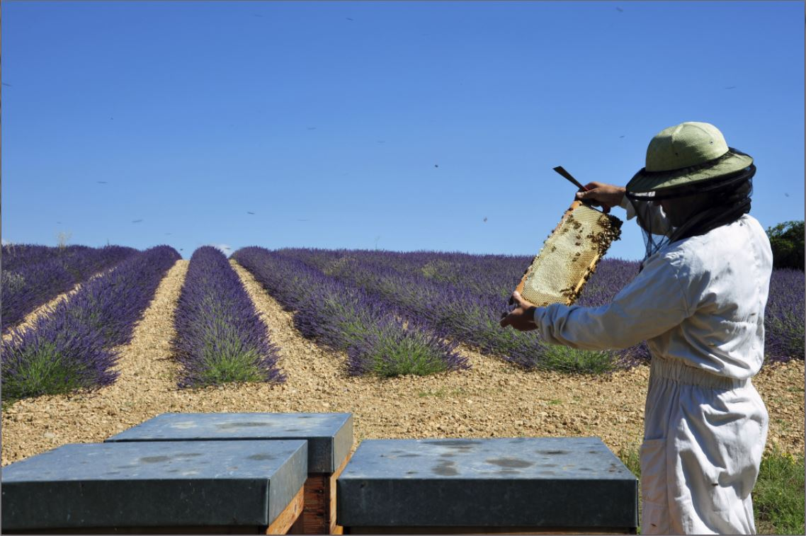 apiculteur def
