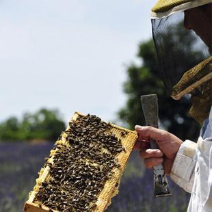 apiculteur vidauban