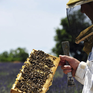 apiculteur istres