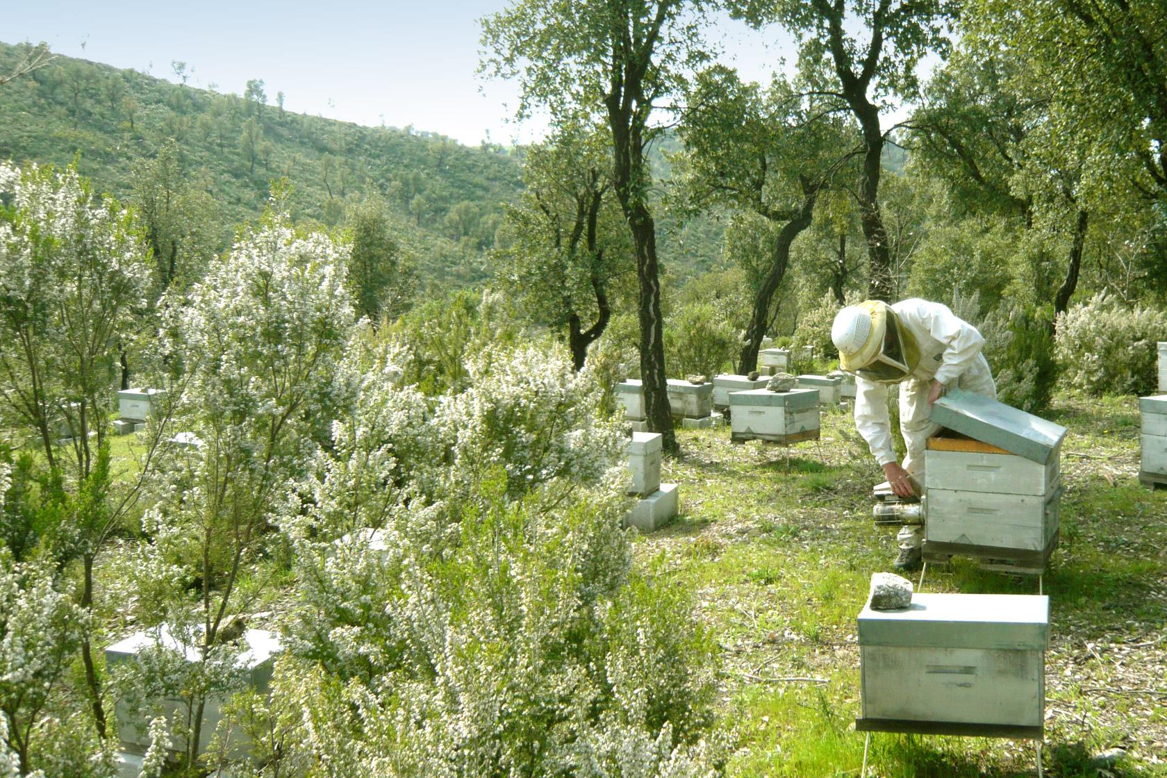 apiculteur en provence