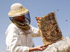 apiculteur aix en provence