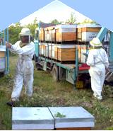 apiculteur isle sur la sorgue