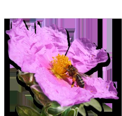 Populaire Paysages et fleurs de Provence - Les paysages et fleurs des Miels  HN23